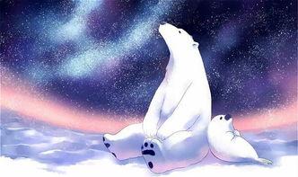 北极熊贷款